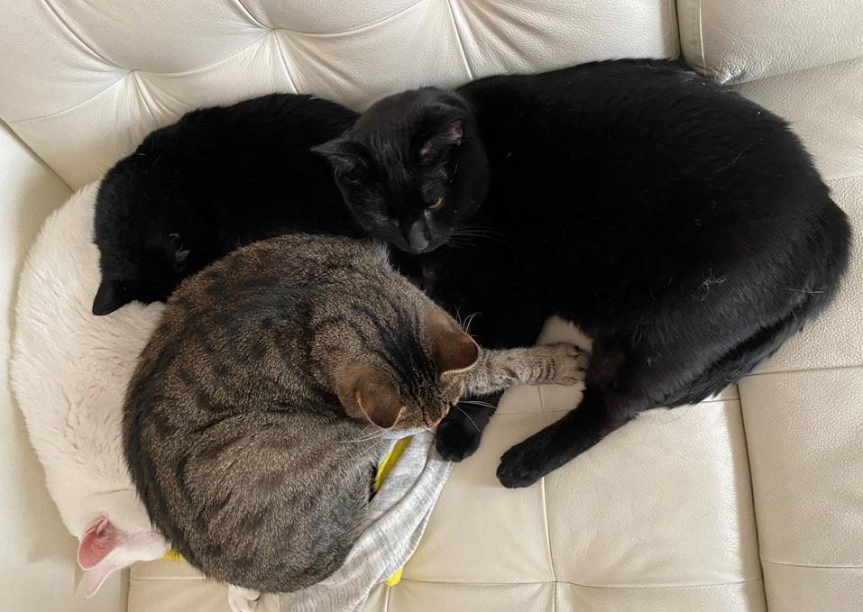 «Терпят нас за вкусняшки»: котики, которые стоят за екатеринбургскими бизнесменами 17