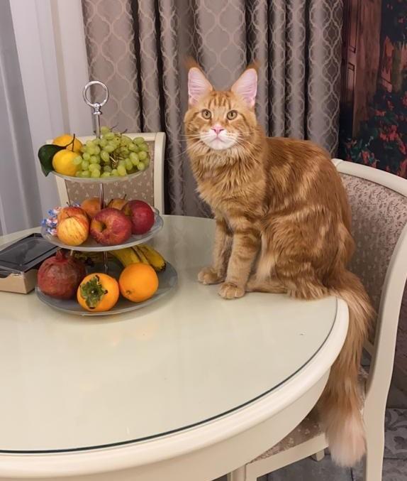 «Терпят нас за вкусняшки»: котики, которые стоят за екатеринбургскими бизнесменами 3