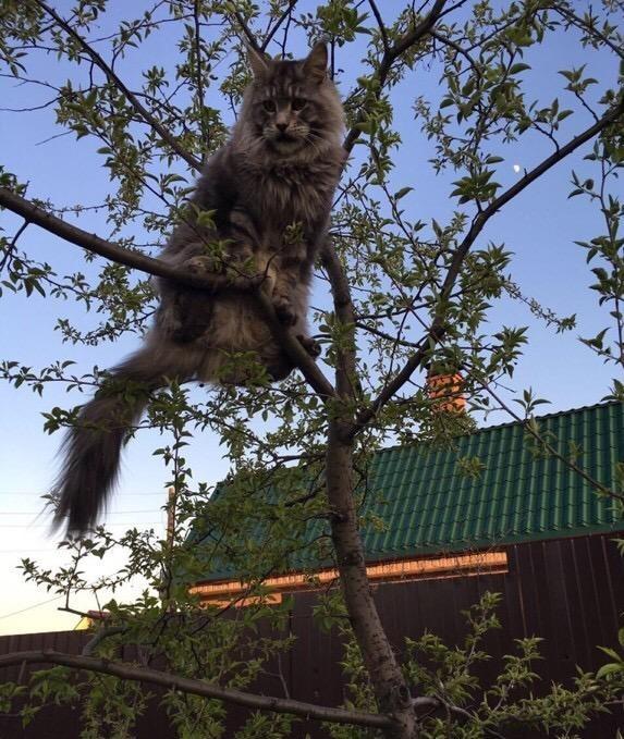 «Терпят нас за вкусняшки»: котики, которые стоят за екатеринбургскими бизнесменами 4