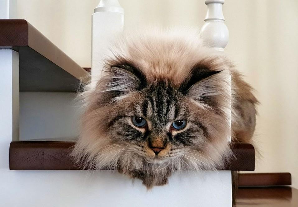 «Терпят нас за вкусняшки»: котики, которые стоят за екатеринбургскими бизнесменами 8