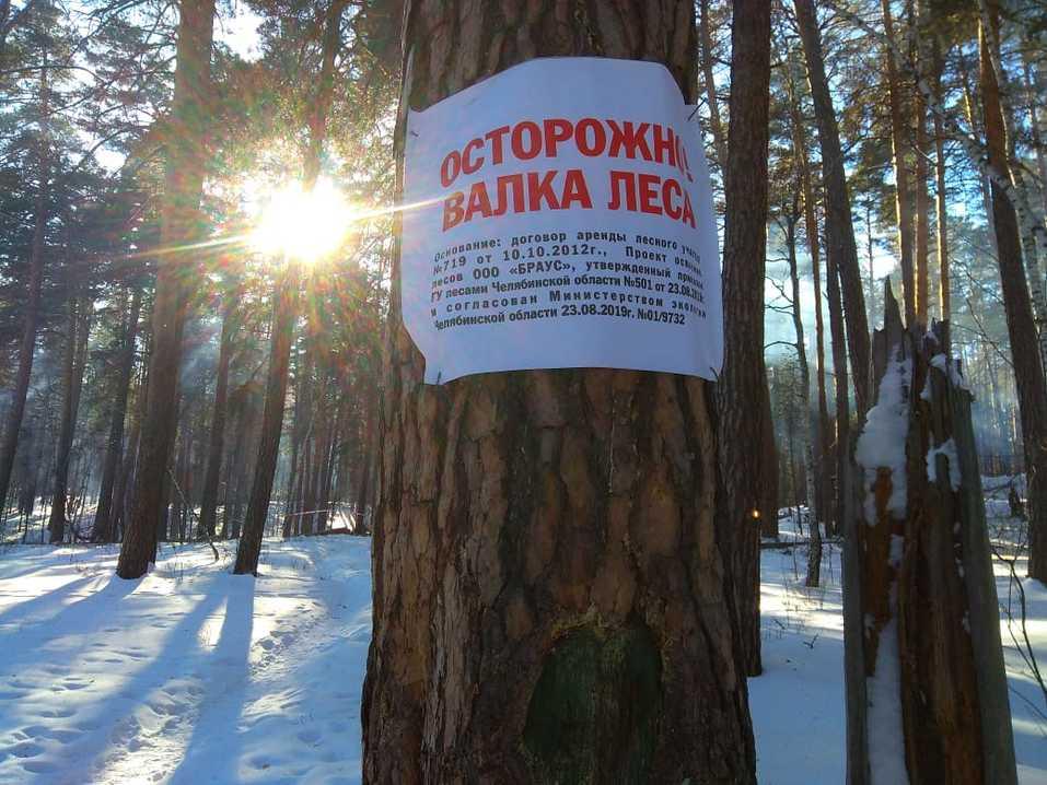 Жители сообщили о вырубках здоровых деревьев под видом больных в санатории Кисегач 1