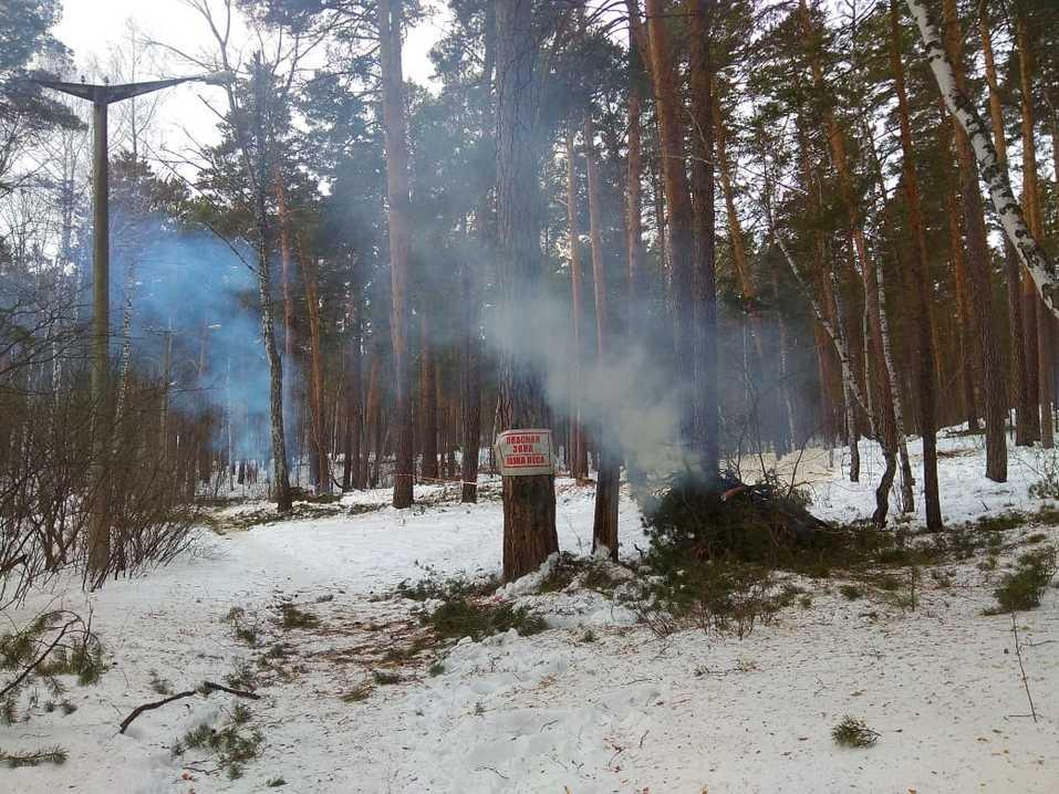 Жители сообщили о вырубках здоровых деревьев под видом больных в санатории Кисегач 2