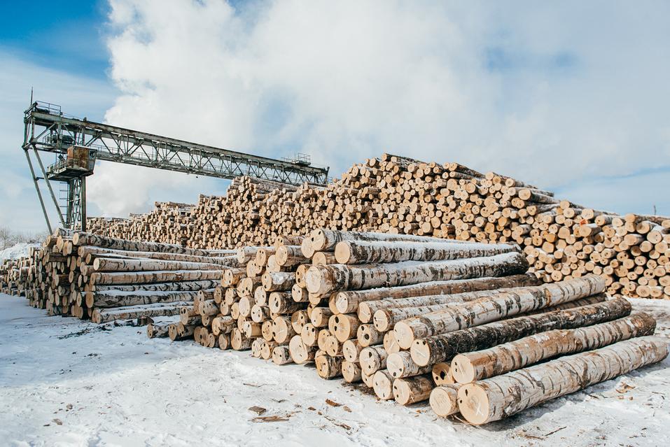 Запасы дерева на производственой площадке