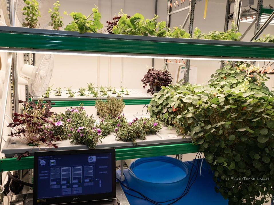 Новосибирский разработчик iFarm вырастил в мульти-лаборатории европейские сорта клубники  1