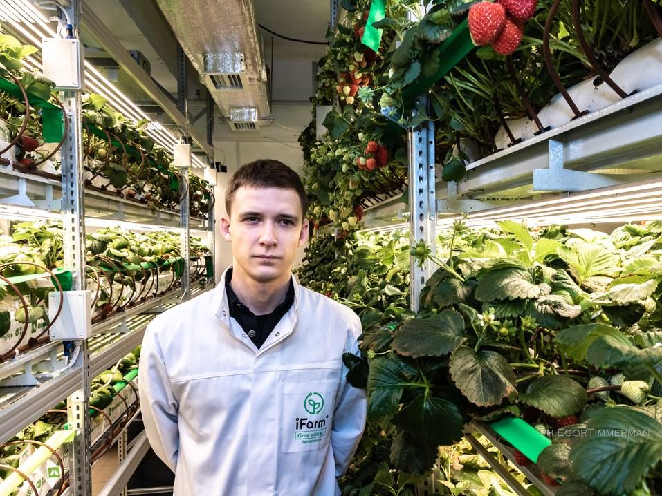 Новосибирский разработчик iFarm вырастил в мульти-лаборатории европейские сорта клубники  17