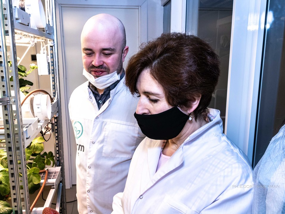 Новосибирский разработчик iFarm вырастил в мульти-лаборатории европейские сорта клубники  22