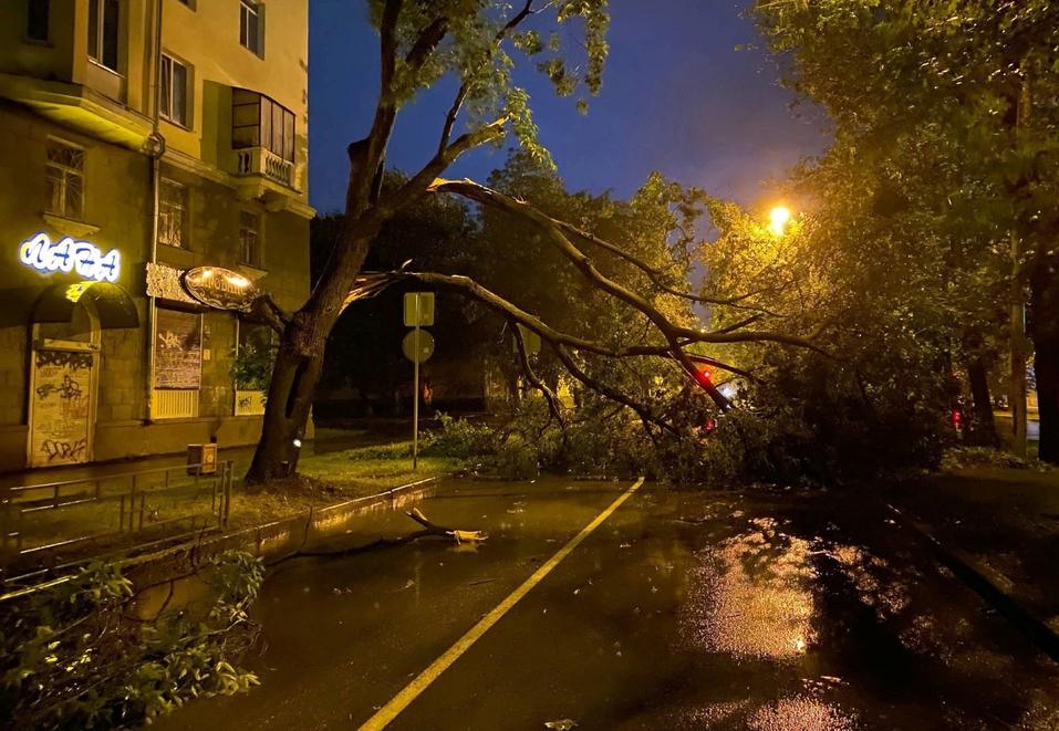 На улице Кировоградской дерево упало на дорогу.