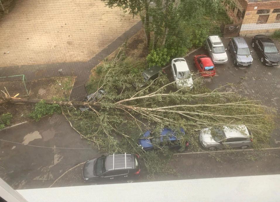 Шторм в Екатеринбурге повалил деревья. Пострадали автомобили 2