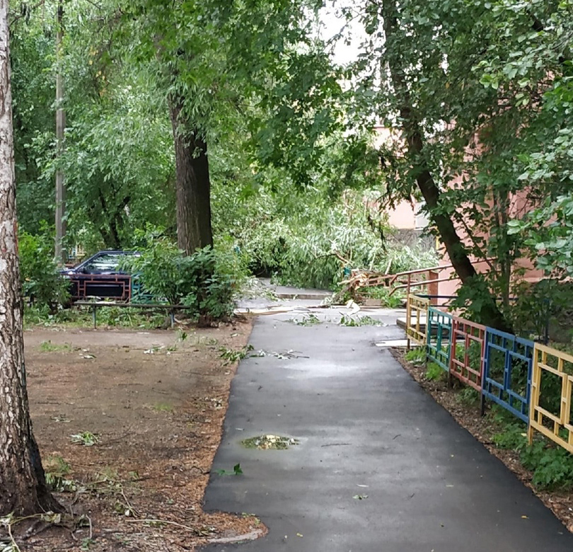 Шторм в Екатеринбурге повалил деревья. Пострадали автомобили 3