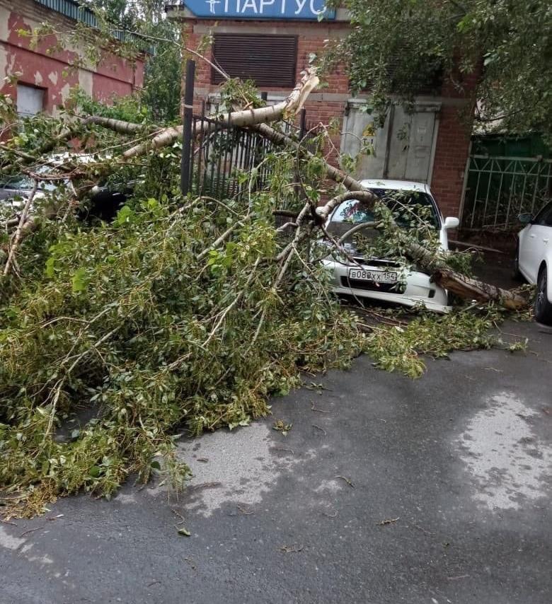 Шторм в Екатеринбурге повалил деревья. Пострадали автомобили 4