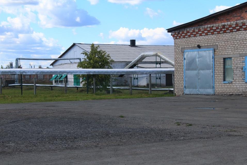 На территории птицефабрики в 25 га пока в основном старые корпуса