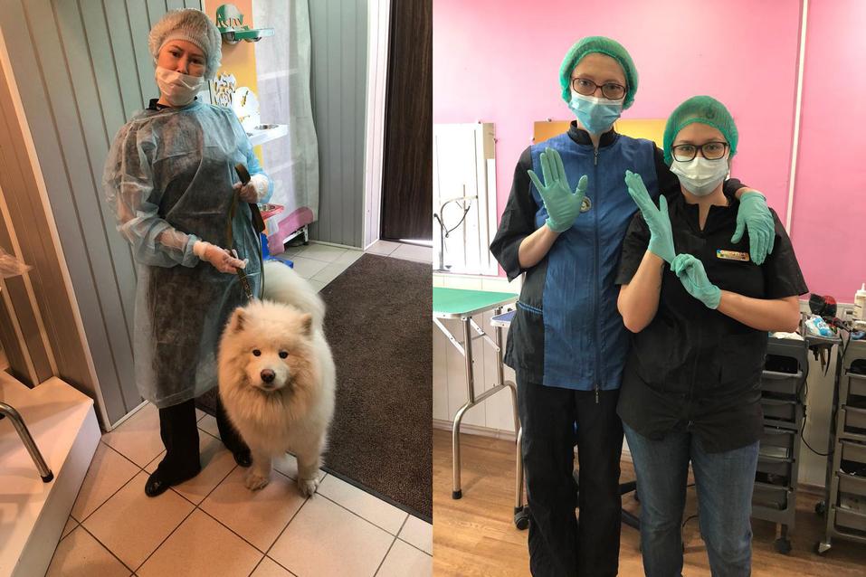 «В России 68 миллионов собак и кошек. Только представьте, какой объем рынка!» 3