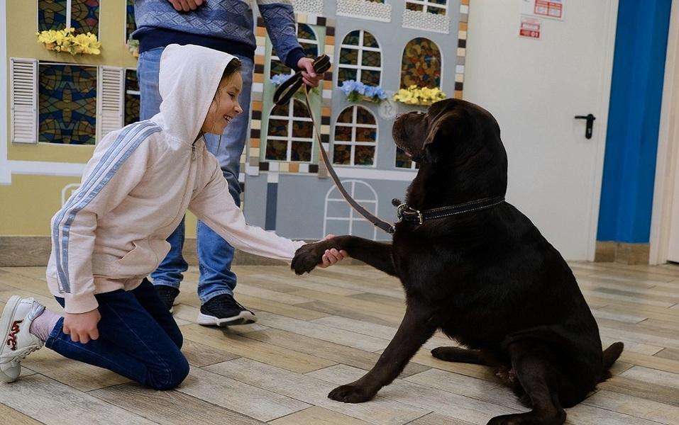 Канистерапия — лечебный эффект достигается во время общения с собаками