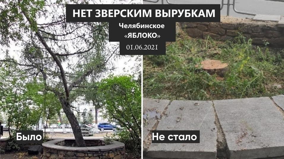 Жители Челябинска несут цветы к спиленным в центре города столетним деревьям 1