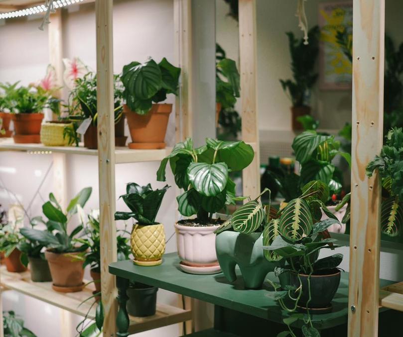 Магазин живых растений нового формата объявил об открытии в Челябинске 1