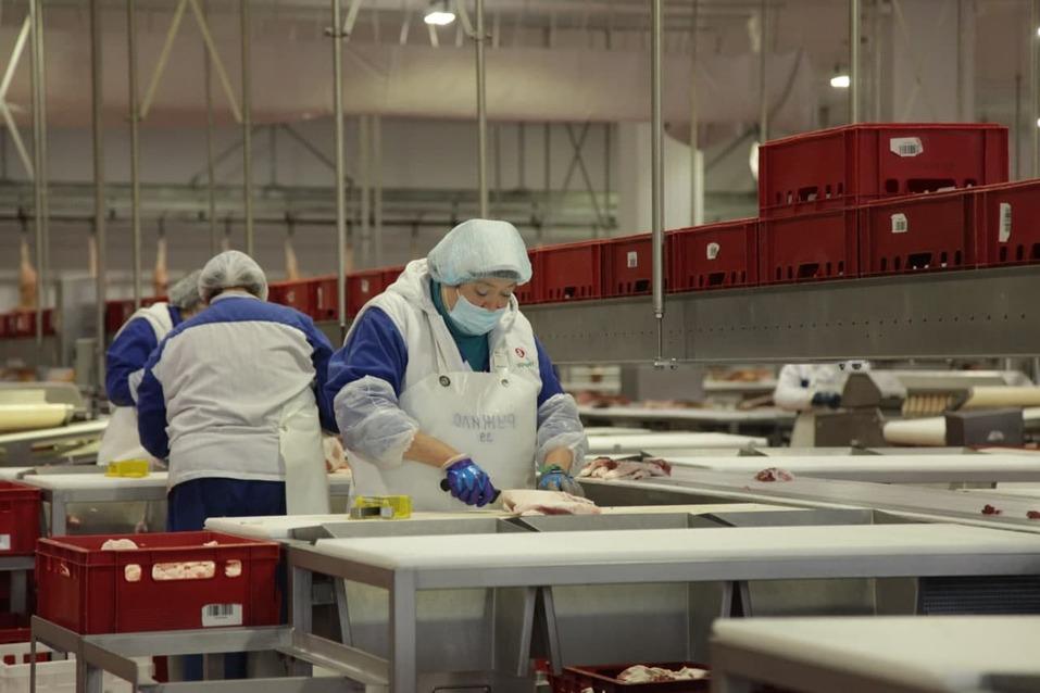«Ариант» потратит 3,2 млрд рублей на увеличение производства мяса в Челябинской области 1