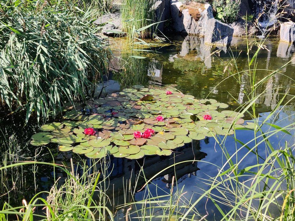 Сад у «Косого дома» завоевал «серебро» на самой известной цветочной выставке в мире 3