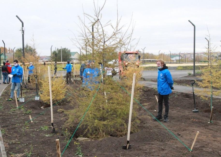 В парке на ЧТЗ посадили даурские лиственницы 1