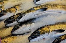Запрет норвежской семги грозит повышением цен на рыбу в челябинских магазинах