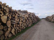 Турецкая Kastamonu запускает в РТ крупнейший завод древесных плит