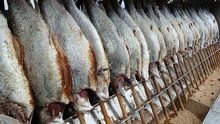 Новосибирскую рыбу будут продавать в специализированных торговых точках