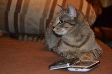 МТС увеличил число абонентов сети LTE в Ростовской области в 25 раз