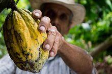 Могут ли фрукты, приезжающие в Новосибирск из Африки, завезти лихорадку Эбола?