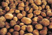 Санкции подтолкнули правительство закупать овощи у свердловчан