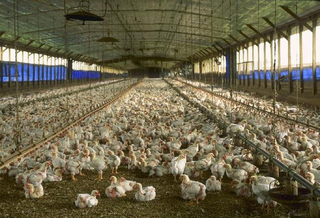 Сбербанк потребовал привлечь к ответственности бенефициара свердловской агрофирмы