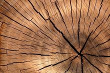 Татарстан намерен закупать пермский лес