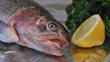 Сеть гастрономических магазинов «Море рыбы» откроет 25 магазинов в Ростове-на-Дону