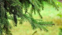 """Национальный парк """"Таганай"""" предлагает купить лес"""
