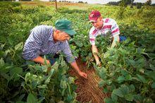 Челябинская область получила субсидии на развитие фермерских хозяйств