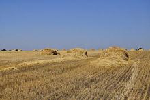 Самые урожайные хозяйства Новосибирской области задолжали банкам