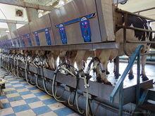 В Абанском районе возвели молочный комплекс