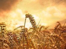 «Рассвет» попросил Городецкого помочь им не пропустить посевную