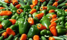 Пенсионные деньги вложат в овощехранилища