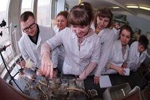 На фармацевтическом рынке Ростовской области грядет налоговая проверка