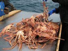 Ростовчанин незаконно поймал 64 тонны крабов