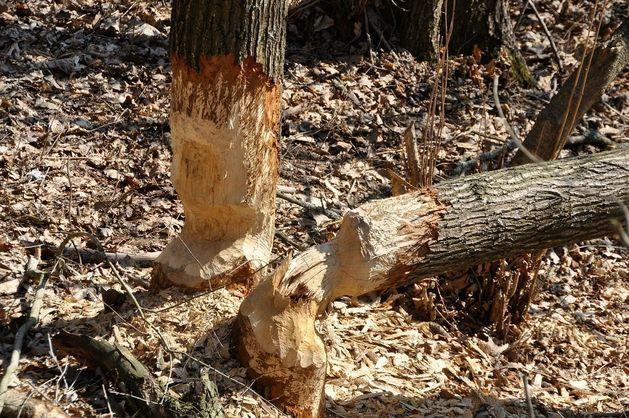 Минприроды предлагает разрешить строительство в лесу