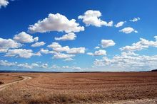 Связанный с семьей главы Минсельхоза «Агрокомплекс» купил землю в Кущевке