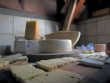 В Челябинске откроется первая мастерская сыра, где будут готовить моцареллу и горгонзолу