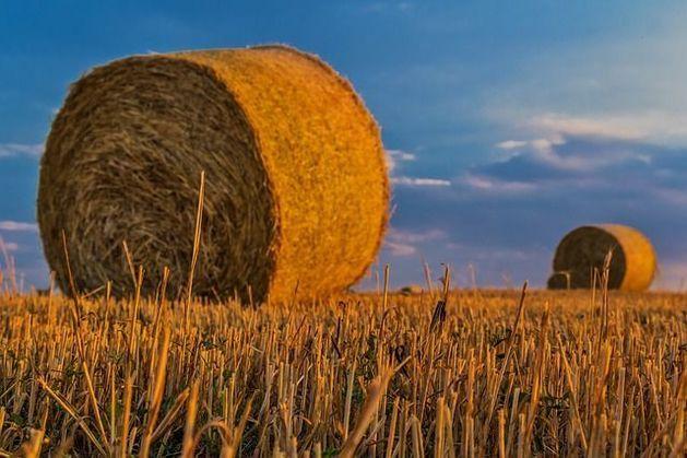 Минсельхоз планирует лишить иностранцев права владения русской землей
