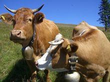 Россия разрешила ввоз сельхозпродукции из Сербии, Эквадора и Молдавии