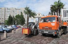 С улиц Красноярска убирают пальмы и туи: когда дадут отопление