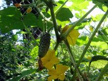 Агрохолдинг «Чурилово» намерен открыть производство в Казахстане