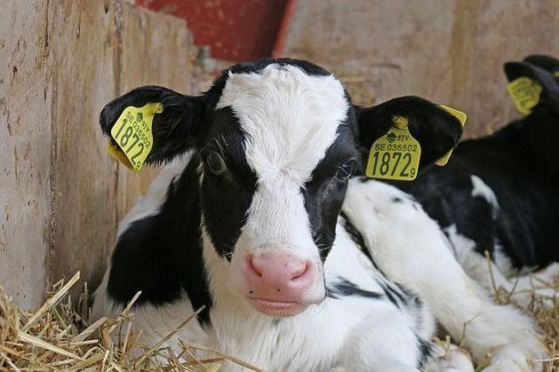 В России производителям молока уменьшат субсидии в 40 раз