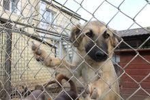 Нижегородский издатель Владимир Гройсман откроет приют европейского уровня для животных