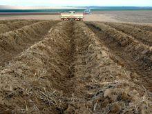 Свердловское правительство вложится в центр по выращиванию картофеля