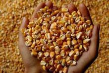 Компания «Амилко» создает на Дону кластер по глубокой переработке зерна
